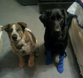 Bailey & Gizmo in Socks Jan 2013