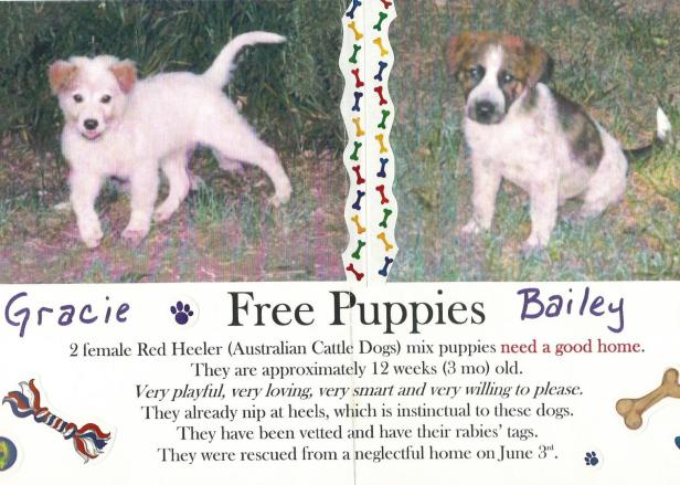 Puppy Flier June 2002