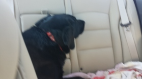 G in back seat