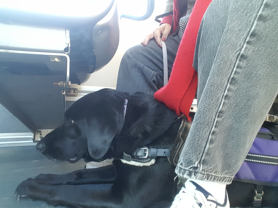 Why's that dog on the bus?